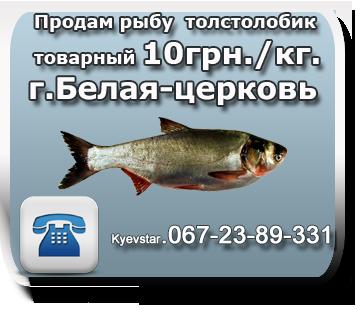 продам рыбу толстолоб